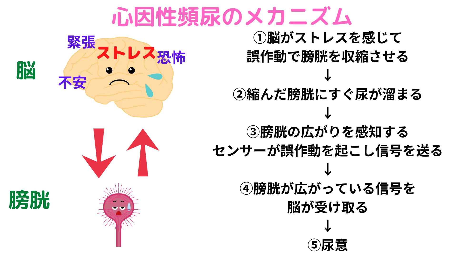 ストレス 頻 尿